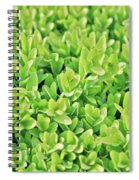 Boxwood Leaves Spiral Notebook
