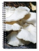 Bracket Fungus Spiral Notebook