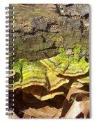 Bracket Fungus Spiral Notebook