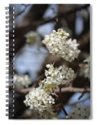 Bradford 15-01 Spiral Notebook