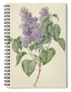 Branch With Purple Lilacs, Maria Geertruyd Barbiers-snabilie, 1786 - 1838 Spiral Notebook