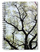 Branches Against Sky In Spring Outback Spiral Notebook
