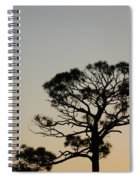 Branches In The Sunset Spiral Notebook