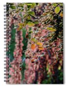 Branches Of A Tree With Colorful Leaves Shining In The Sunlight Spiral Notebook