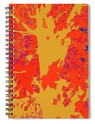 Brandywine  Maple Fall Colors 4 Spiral Notebook