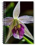 Brassocattleya Orchid Spiral Notebook