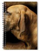 Brazilian Row Spiral Notebook