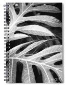 Breadfruit Tree Leaves Spiral Notebook