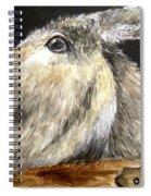 Breakout Mule Spiral Notebook