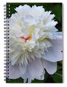 Breathtaking - Festiva Maxima Double White Peony Spiral Notebook