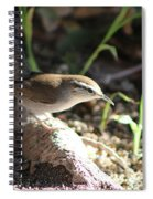 Breswick Wren On Tree Root 2 Spiral Notebook