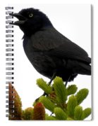 Brewer's Blackbird Spiral Notebook