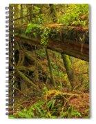 Bridge In The Rainforest Spiral Notebook