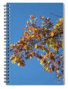 Bright Autumn Branch Spiral Notebook