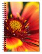 Bright Blanket Flower Spiral Notebook