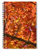 Bright Colorful Autumn Tree Leaves Art Prints Baslee Troutman Spiral Notebook