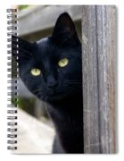 Bright Eyed Kitty Spiral Notebook