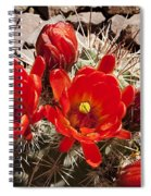 Bright Orange Cactus Blossoms Spiral Notebook