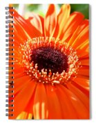 Bright Orange Gerbera  Spiral Notebook