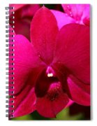 Bright Scarlet Red Orchid Spiral Notebook