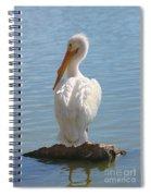 Bright White Pelican Spiral Notebook