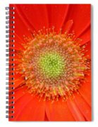 Brighteyes Spiral Notebook