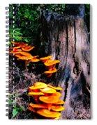 Brilliant Orange Spiral Notebook
