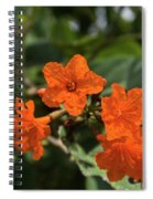 Brilliant Orange Tropical Flower Spiral Notebook