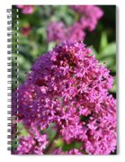 Brilliant Pink Blooming Phlox Flowers In A Garden Spiral Notebook
