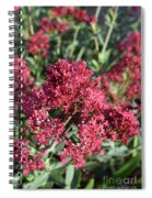 Brilliant Red Blooming Phlox Flowers In A Garden Spiral Notebook