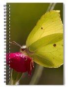 Brimstone 2 Spiral Notebook