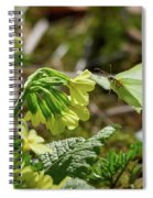Brimstone On Cowslip Primrose Spiral Notebook