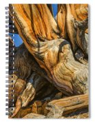 Bristle Cone Pine Tree White Mtns Ca Color Img 6799 Spiral Notebook