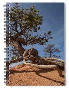 Bristle Cone Tree Spiral Notebook