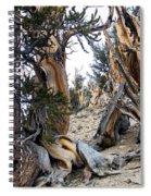 Bristlecone Forest, Ca November 2105 Spiral Notebook