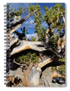 Bristlecone Great Basin Landscape Spiral Notebook