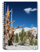 Bristlecone Pine - Pinus Longaeva Spiral Notebook