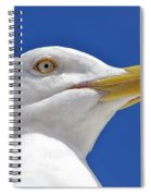 British Herring Gull Spiral Notebook