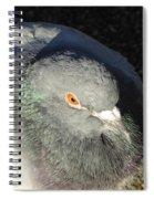 British Pigeon Spiral Notebook
