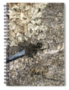 Broad Bodied Chaser Spiral Notebook