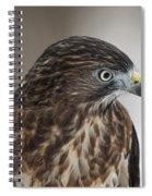 Broad-winged Hawk Spiral Notebook