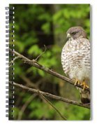 Broad Winged Hawk On The Lookout Spiral Notebook