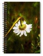 Broken Hearted Oxeye Daisy Asteraceae  Spiral Notebook