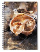 Broken Whelk Shell Spiral Notebook