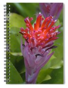 Bromeliad Flower Spiral Notebook