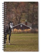 Brown And White Horse Spiral Notebook