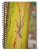 Brown Anole Spiral Notebook