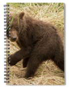 Brown Bear Cub Turns To Look Back Spiral Notebook