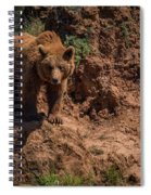 Brown Bear Watches From Steep Rocky Outcrop Spiral Notebook