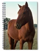 Brown Beauty Spiral Notebook